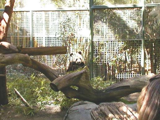 Sandiego Zoo CA
