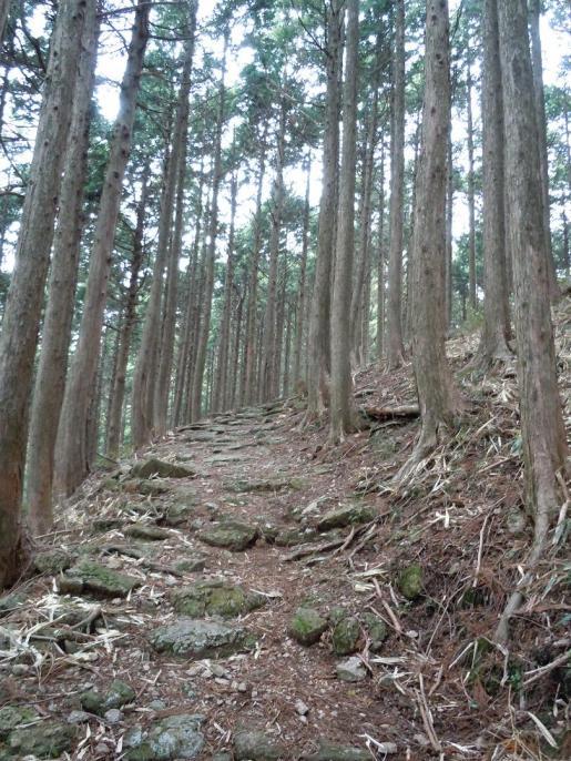 DSCN0256石畳の登り坂3キロあたり.JPG