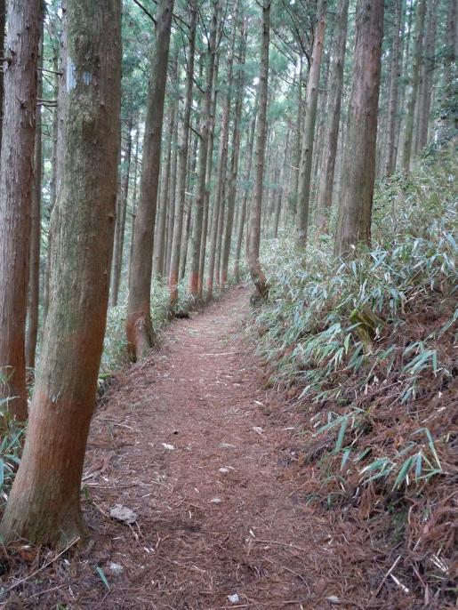 DSCN0257快適な下りの山道.JPG