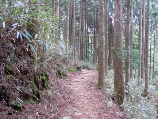 DSCN0277石畳の下り坂.JPG