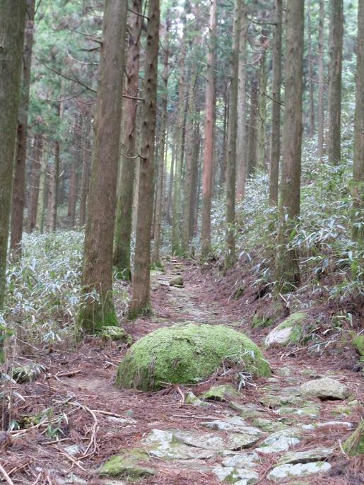 DSCN0282苔むした大きな石.JPG